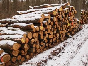 Brennholzstapel Eiche